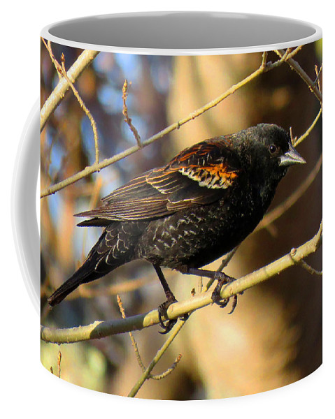 Red-winged Coffee Mug featuring the photograph Young Male Red-winged Black Bird by Dianne Cowen