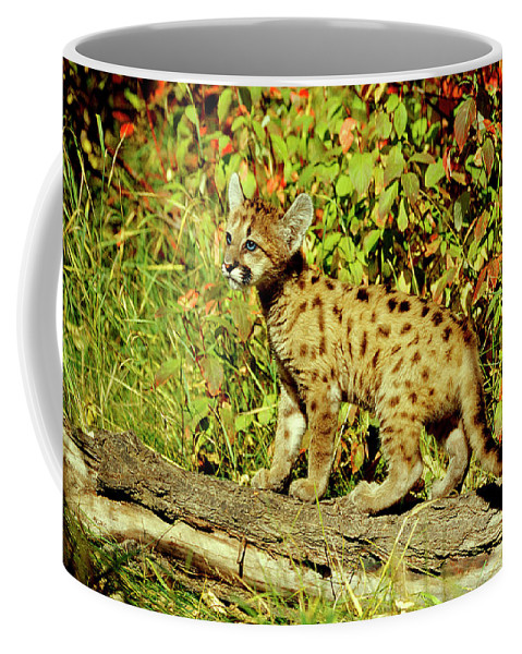 Cougar Coffee Mug featuring the photograph Young Mountain Lion by Eric Albright