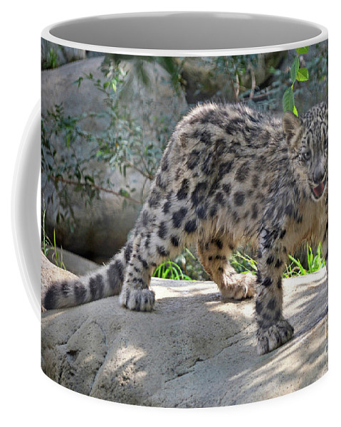 Animal Coffee Mug featuring the photograph Young Snow Leopard by Dan Holm