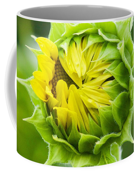 Flower Coffee Mug featuring the photograph Young Sunflower by Tiffany Erdman