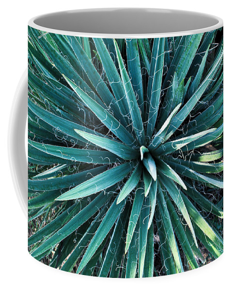 Yucca Coffee Mug featuring the photograph Yucca Plant Detail by Douglas Barnett