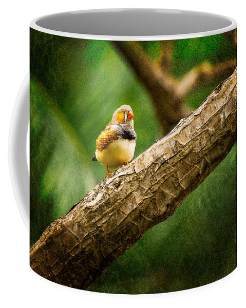 Bloedel Floral Bird Conservatory Coffee Mug featuring the photograph Zebra Finch Male by Peter v Quenter
