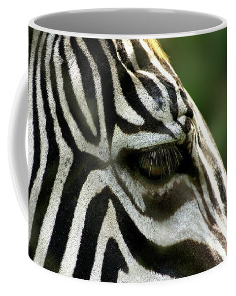 Wild Coffee Mug featuring the photograph Zebra by FL collection