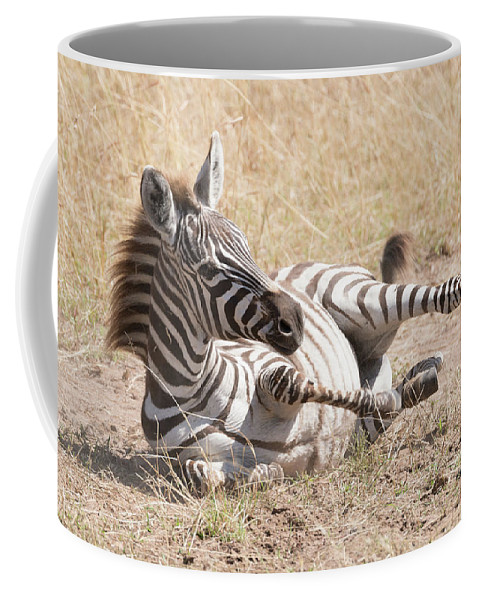 Africa Coffee Mug featuring the photograph Zebra Foal Rolls In Dust On Savannah by Ndp