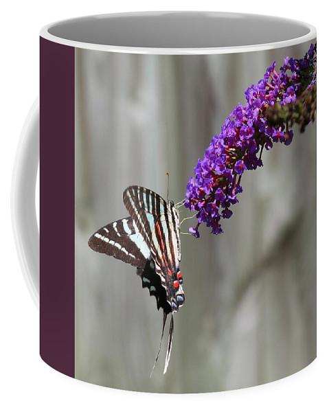 Zebra Swallowtail Butterfly 2 Coffee Mug featuring the photograph Zebra Swallowtail Butterfly 2 by Shannon Louder