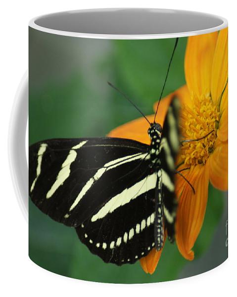 Orange Coffee Mug featuring the photograph Zebra Wing Profile...  # by Rob Luzier