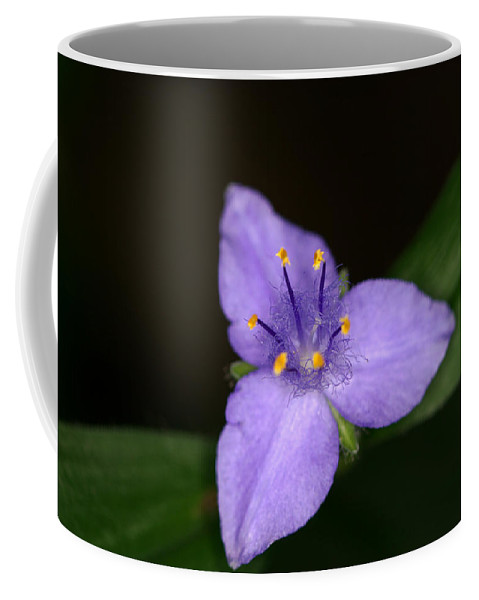 Zigzag Coffee Mug featuring the photograph Zigzag Spiderwort by Jack R Perry