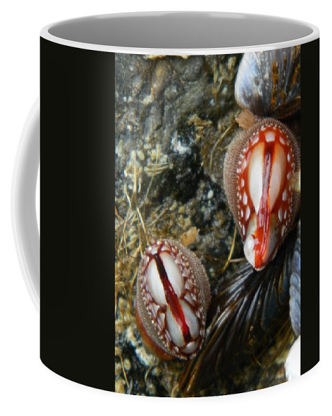 Clams Coffee Mug featuring the photograph Red And Gooey by Gallery Of Hope