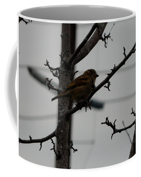 Nature Coffee Mug featuring the photograph Feathered Friend by Barb Montanye Meseroll