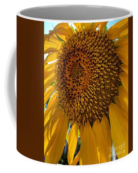 Sunflower Coffee Mug featuring the photograph Sunflower In The Sun by Melissa OGara