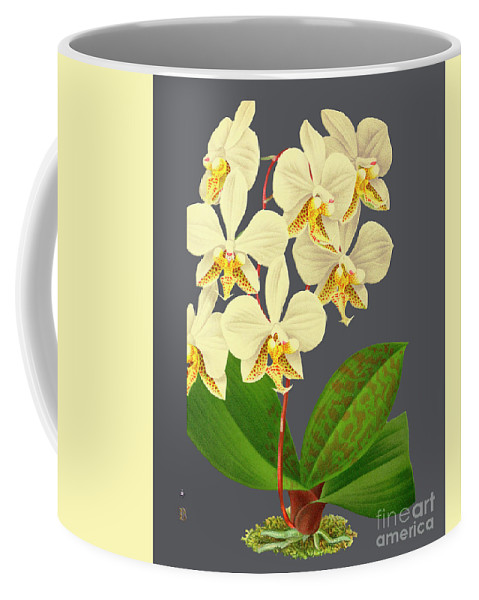 Vintage Coffee Mug featuring the mixed media Orchid Old Print by Baptiste Posters