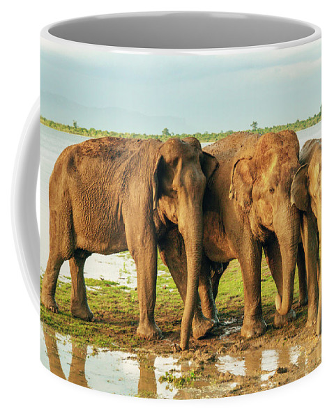 Elephant Coffee Mug featuring the photograph Elephants - Three Best Friends 2 by Max Blumenthal
