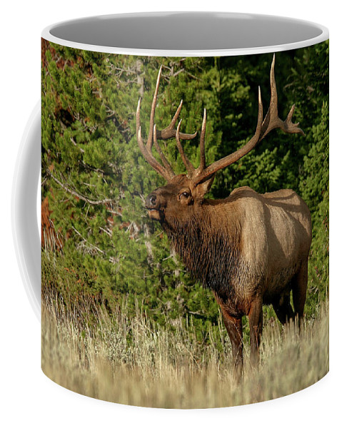 Elk Coffee Mug featuring the photograph Elk by Ronnie and Frances Howard