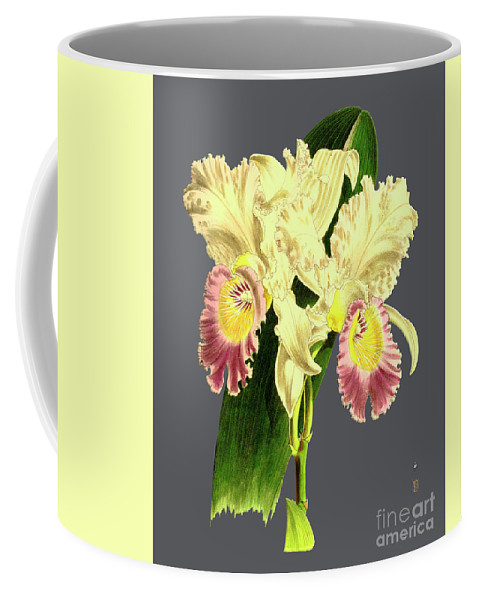 Vintage Coffee Mug featuring the digital art Orchid Old Print by Baptiste Posters