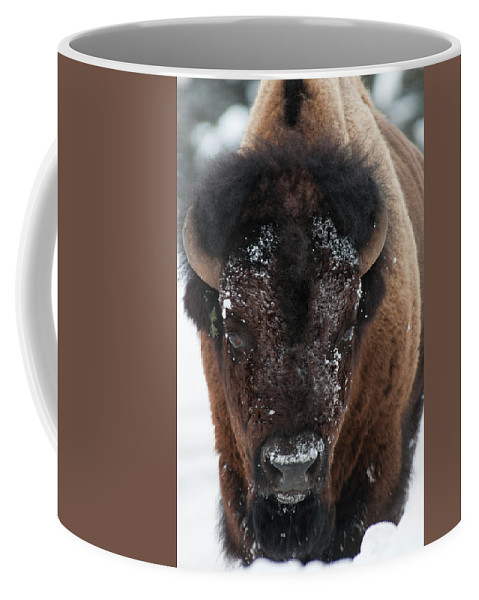 Bison Coffee Mug featuring the photograph American Bison - Winter in Yellowstone by Frank Madia