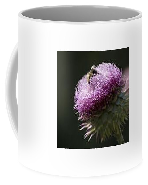 Bee Coffee Mug featuring the photograph Bee On Thistle by Nancy Ayanna Wyatt