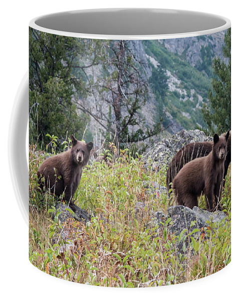 Bear Coffee Mug featuring the photograph What Are You Looking At? by Paul Quinn