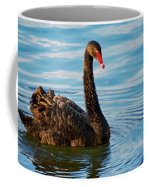 Black Swan Coffee Mug featuring the photograph Black Swan Making Ripples by Zayne Diamond Photographic