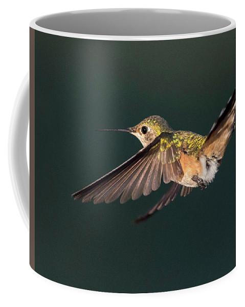 Hummingbird Coffee Mug featuring the photograph Broad-tailed Hummingbird by Judi Dressler