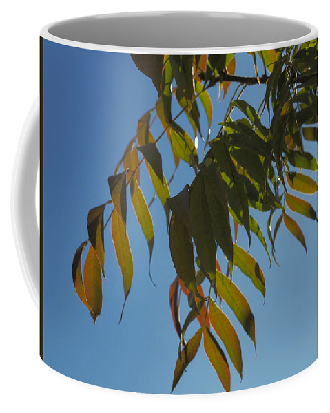 Landscape Coffee Mug featuring the photograph Colors Of The Neighborhood 24 by Richard Thomas