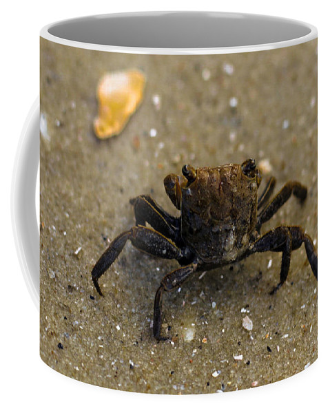 Sunset Coffee Mug featuring the photograph Curious Crab by Victoria Williams