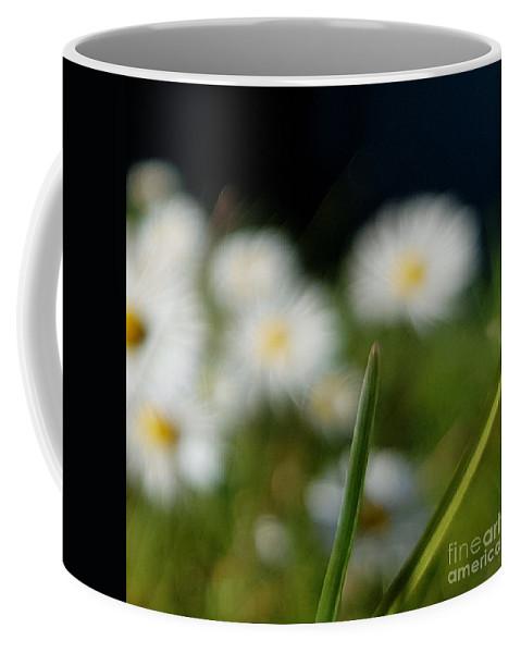Coffee Mug featuring the photograph Daisy Landscape by Paola Baroni