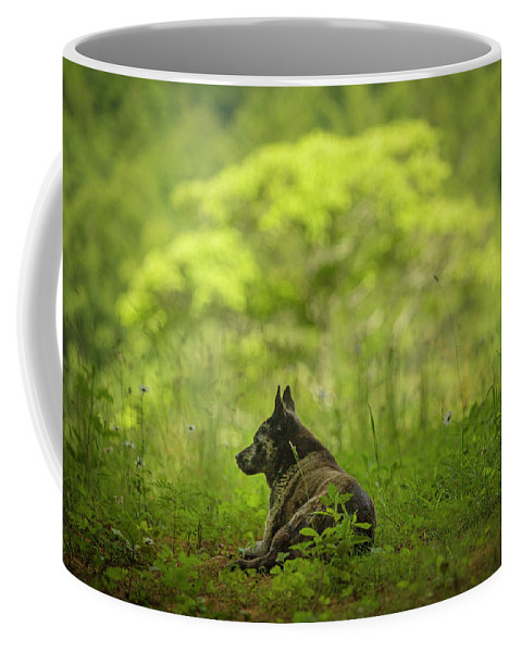 Dog Coffee Mug featuring the photograph Dog On A Hot Day In The Shade by SL Ernst