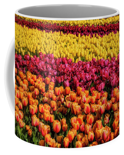 Tulip Coffee Mug featuring the photograph Dreaming Of Endless Colorful Tulips by Garry Gay