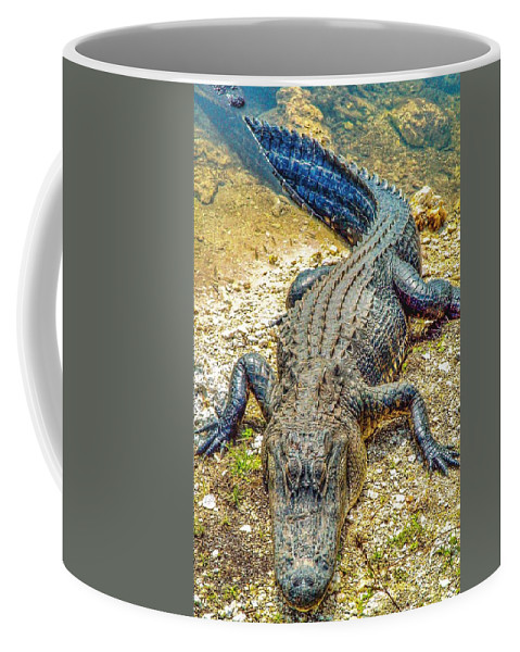 Florida Coffee Mug featuring the photograph Florida Gator 2 by Tommy Anderson