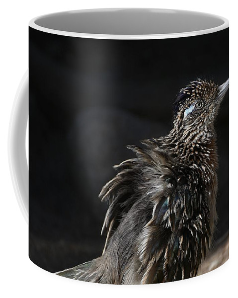 Greater Roadrunner Coffee Mug featuring the photograph Fluffy Roadrunner by Fraida Gutovich