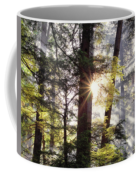 Idaho Scenics Coffee Mug featuring the photograph Forest Sunrise by Leland D Howard