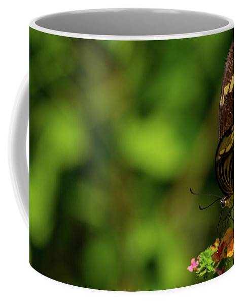 Insect Coffee Mug featuring the photograph Giant Swallowtail Butterfly by Blair Howell