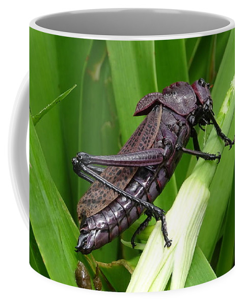Coffee Mug featuring the photograph Grasshopper by Stanley Vreedeveld