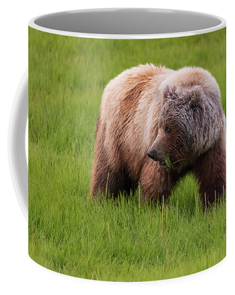 Alaska Coffee Mug featuring the photograph Grazing by Chad Dutson