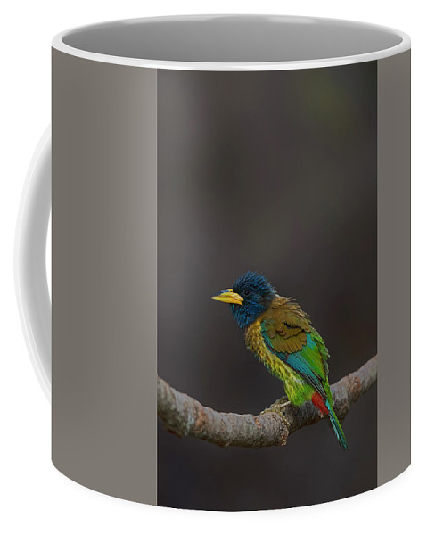 Bird Images For Print Coffee Mug featuring the photograph Great Barbet by Uma Ganesh