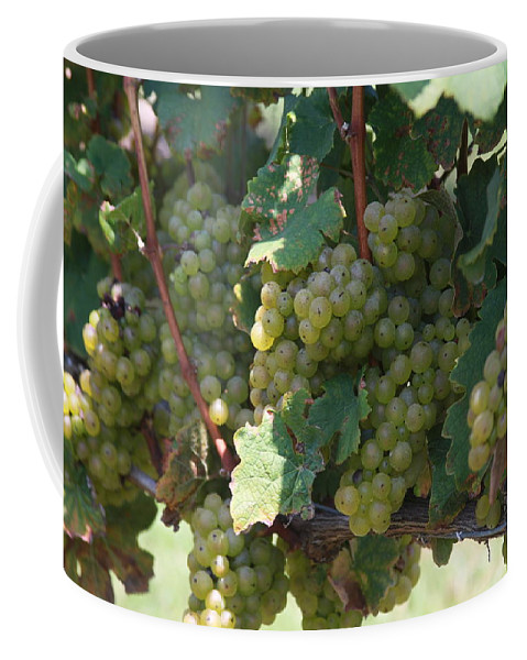 Green Grapes Coffee Mug featuring the photograph Green Grapes On The Vine 18 by Cathy Lindsey