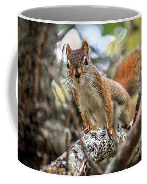 Autumn Fall Colours Colors Winter Red Yellow Red Orange Blue Harvest Evening The End Over This Before Winter Awakening Fall Colours Fall Color Summers End Pumpkins Halloween Leaves Gourds Fall Avenue Coffee Mug featuring the photograph Hello by David Matthews