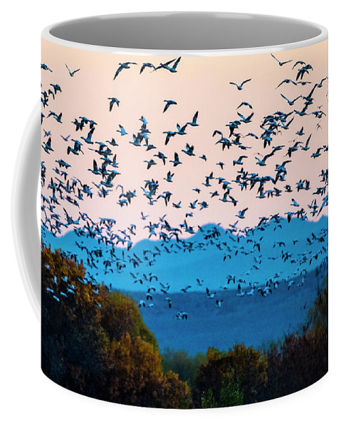 Photography Coffee Mug featuring the photograph Herd Of Snow Geese In Flight, Soccoro by Panoramic Images