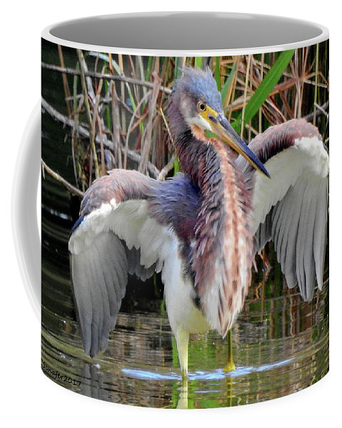 Tricolored Heron Coffee Mug featuring the photograph Herding Supper by Charlotte Schafer