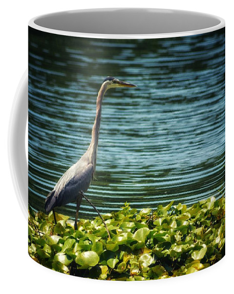 Heron Coffee Mug featuring the photograph Heron In The Lily Pads by JasoBones Photography