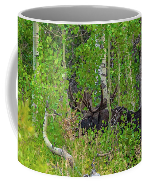 Moose Coffee Mug featuring the photograph Hide And Seek by Timothy Smith