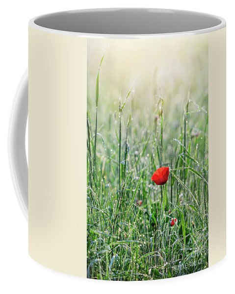 Kremsdorf Coffee Mug featuring the photograph In The Mist Of The Morning by Evelina Kremsdorf