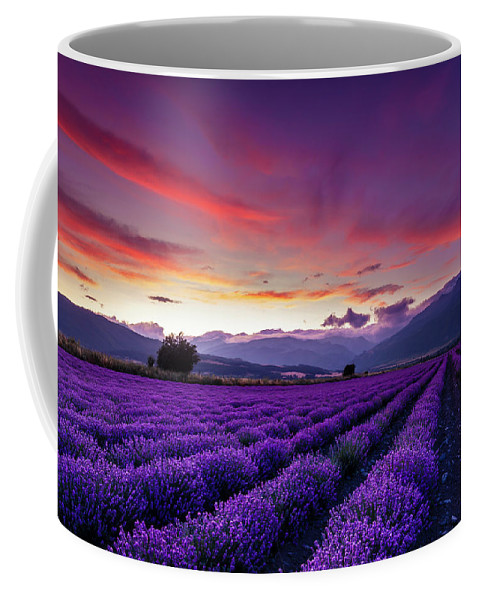Dusk Coffee Mug featuring the photograph Lavender Season by Evgeni Dinev