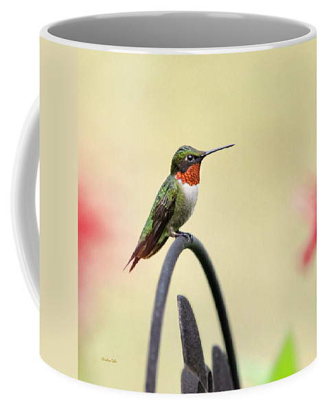 Little Hummingbird Coffee Mug featuring the photograph Little Hummingbird by Christina Rollo