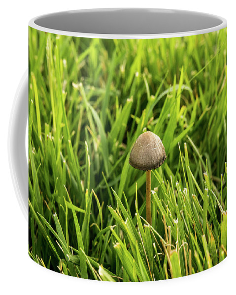 Lonely Coffee Mug featuring the photograph Lonely Little Mushroom Floating On The Grass by Douglas Barnett