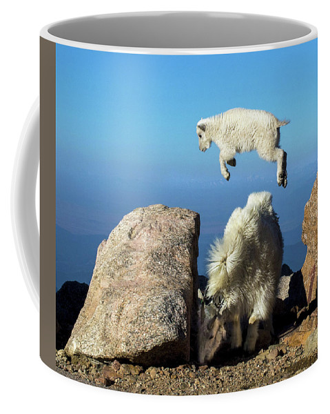 Mountain Goat Coffee Mug featuring the photograph Look Ma, I'm Flying by Judi Dressler
