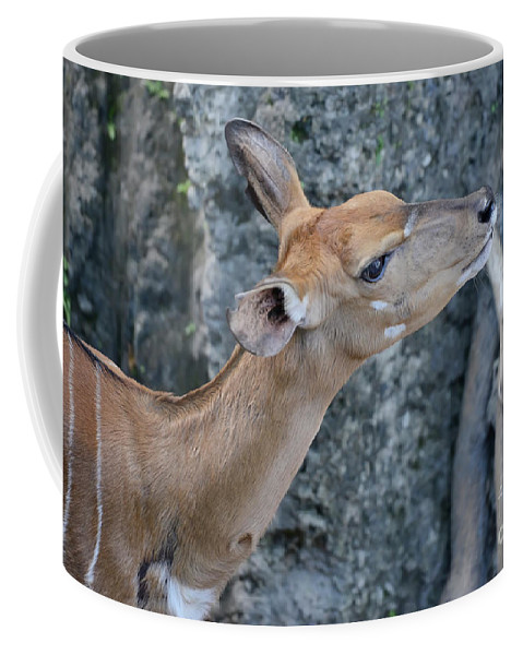 Lowland Nyala Coffee Mug featuring the photograph Lowland Nyala by Olga Hamilton
