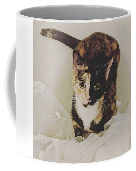 Cute Cat Coffee Mug featuring the photograph Meet Star by Star And Ray