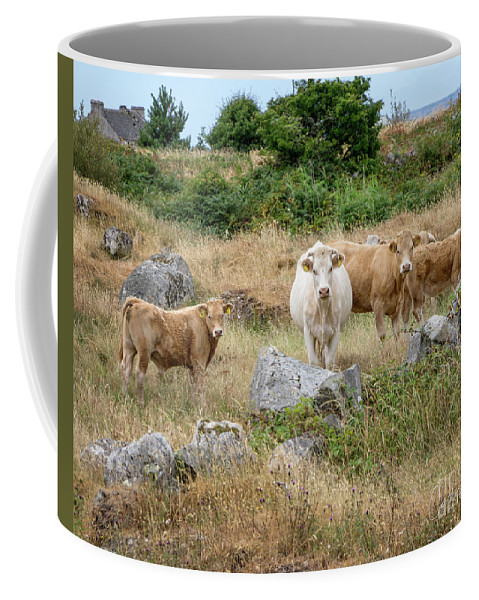 Rural Coffee Mug featuring the photograph Moo by Claudia Kuhn