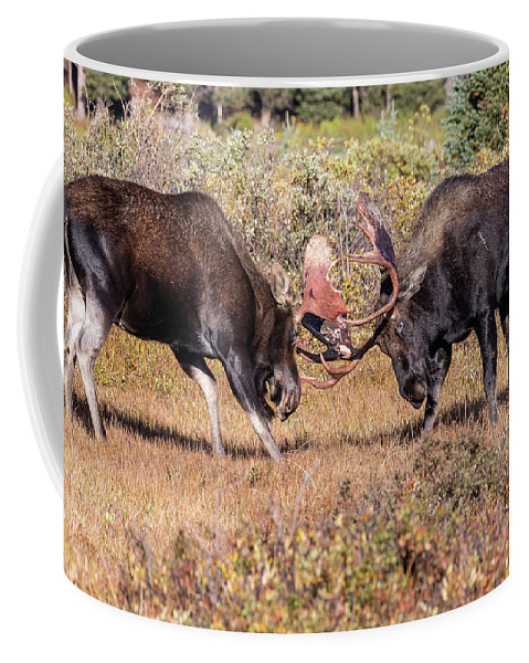 Moose Coffee Mug featuring the photograph Moose Bulls Spar In The Colorado High Country by Tony Hake